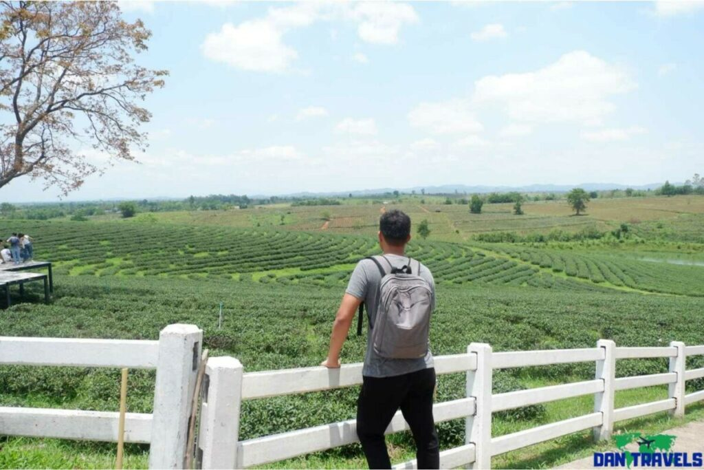 Tea Plantation - 1-day chiang rai itinerary
