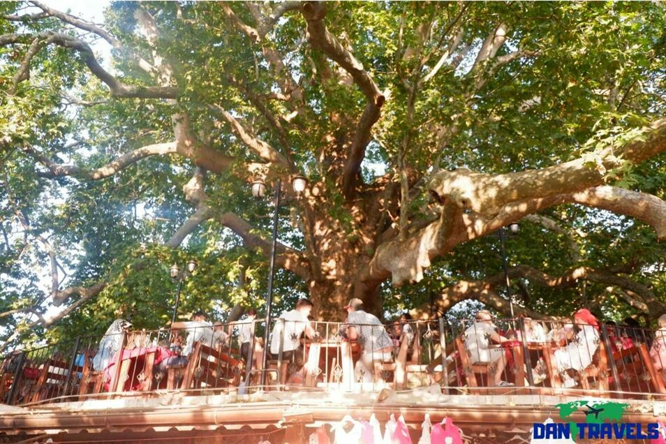 600-year old giant tree Turkey itinerary